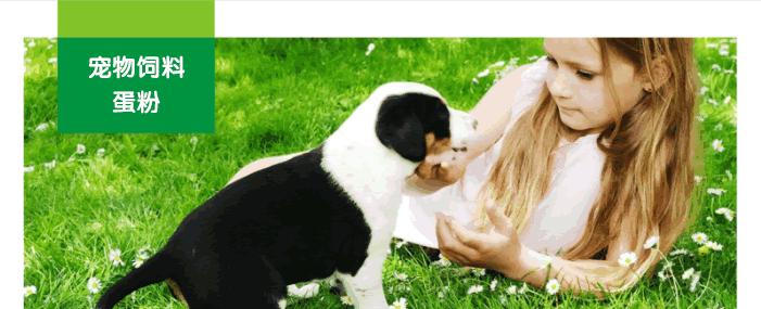 宠物饲料蛋粉
